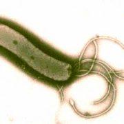 gyomorrák kialakulása helicobacter pylori révén